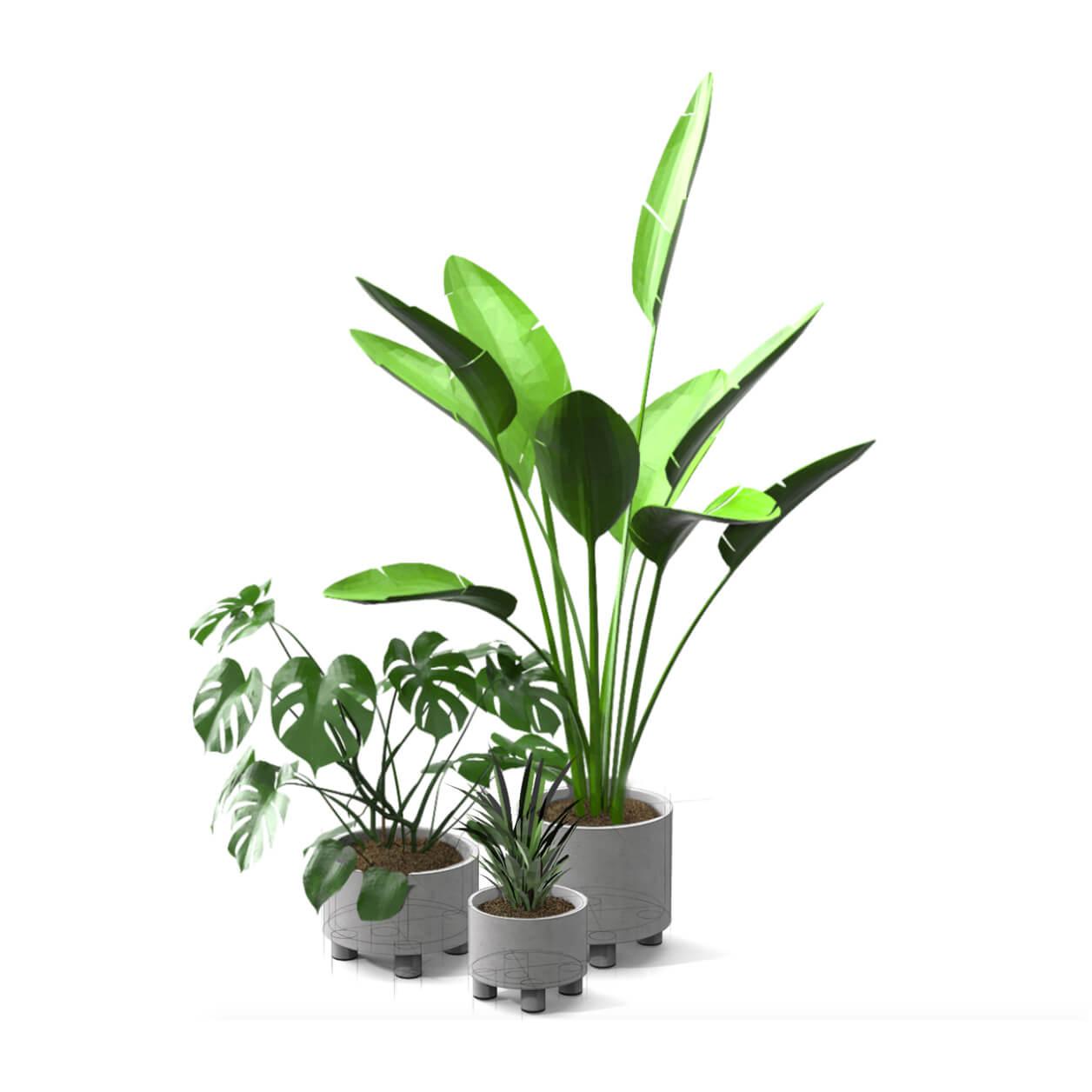 CONCRETE-PLANTERwplants